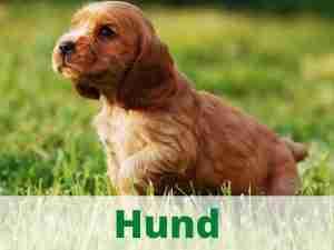 Hund Hundebedarf Heimtierdepot