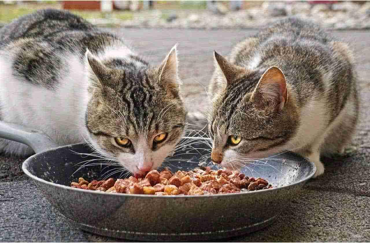 Nassfutter Katze Katzennassfutter