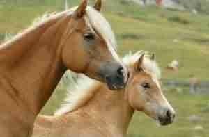 Pferd Pferdefutter Heimtierdepot