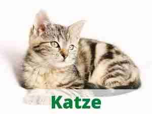 Katze Heimtierdepot Katzenzubehör Katzenbedarf