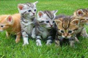 Katzenwelpen Aufzucht Ergänzungsfutter