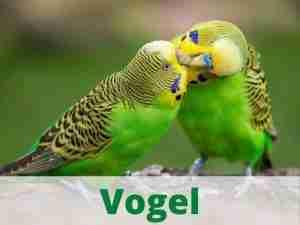Vogel Vogelzubehör Vogelbedarf Heimtierdepot