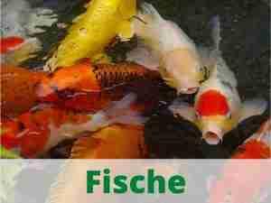 Fische Heimtierdepot Aqua Teichfische Fischfutter Trockenfutter Teichfischfutter