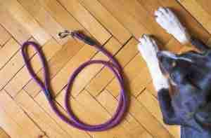 Hundehalsband Hundeleine Hundegeschirr Hundemaulkorb